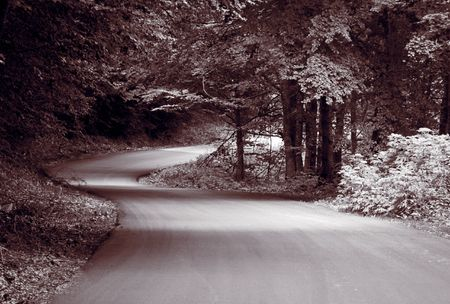 An empty road in the forest in black and white Stock Photo