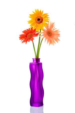 crimson colour: Three gerberas in a flower vase against white background