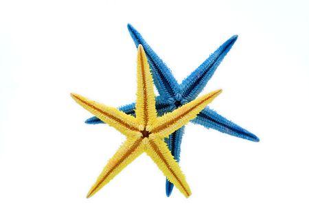 Yellow and blue starfish against white background photo