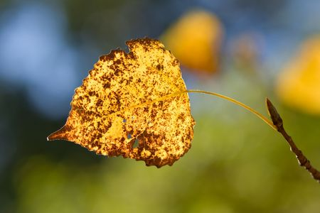 Colorful fall leaf on a branch photo