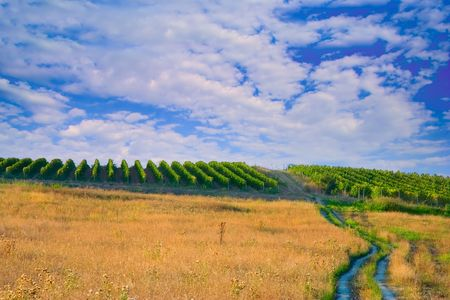 path to wealth: A view of a wine plantation in Macedonia