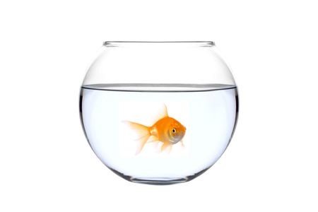 goldenfish: A golden fish in a bowl