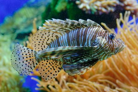 live coral: A view of an exotic fish in aquarium