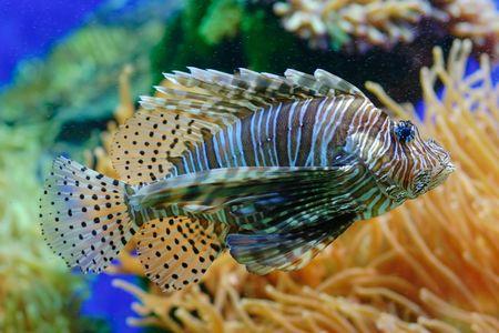 exotic fish: Una vista de peces ex�ticos en un acuario Foto de archivo