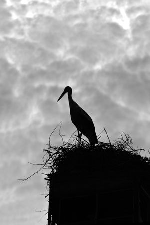 Silhouette of a stork against cloudy sky photo