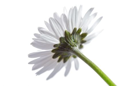 Daisy Stock Photo - 1132022