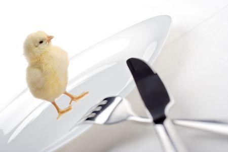 WeÂ've got chicken for dinner photo