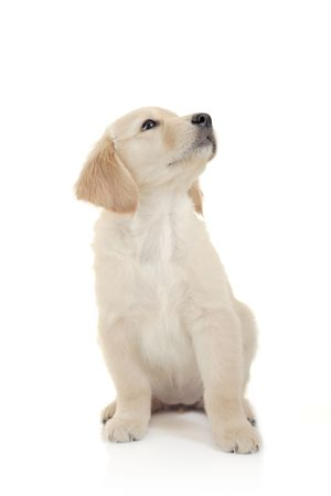Curious puppy against white background Stock Photo - 2118539