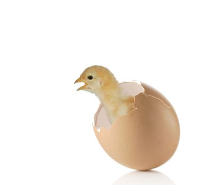 chicken coming out of an eggshell photo