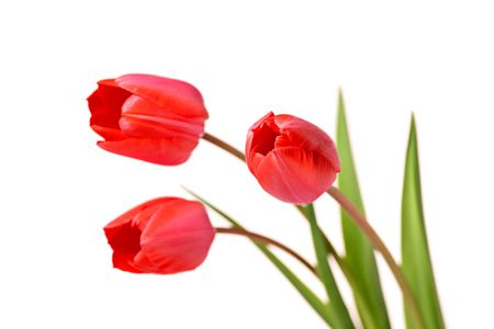 Bunch of red tulips Stock Photo - 2891978