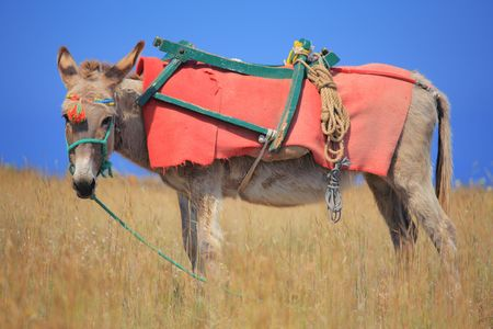 Donkey on Santorini island, Greece photo