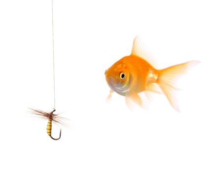 Golden fish and a fishing bait photo