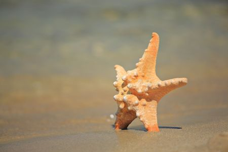 Starfish on the shore photo