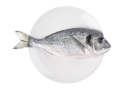 sparus: Uncooked fish (sparus auratus)on a plate isolated against white background