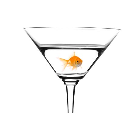 Golden fish swimming in martini cocktail isolated against white background photo
