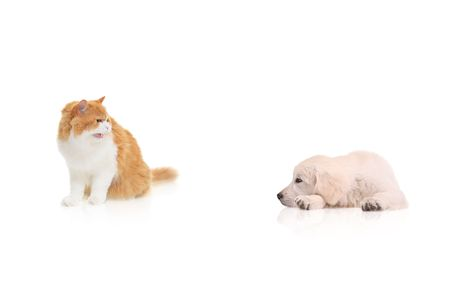 Cat staring at a dog isolated against white background photo