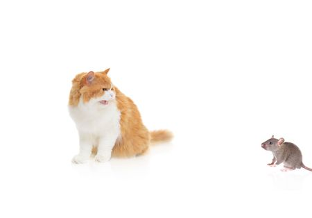 Cat watching a mouse isolated against white background Stock Photo - 4290509