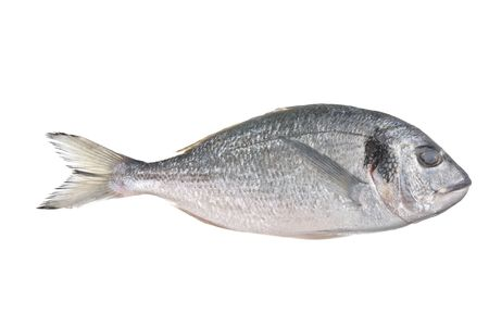 sparus: Uncooked fish (sparus auratus) isolated against a white background