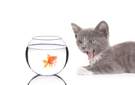 Cat hissing on a fish in a fish bowl against white background photo
