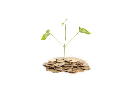 Tree growing from pile of coins isolated against white background photo