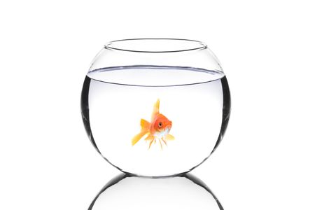 Golden fish in a bowl isolated on white background photo