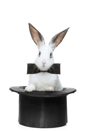 conejo: Una vista de un conejo con corbata en un sombrero aislado sobre fondo blanco