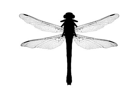 dragonfly wing: A silhouette of a dragonfly isolated on white background