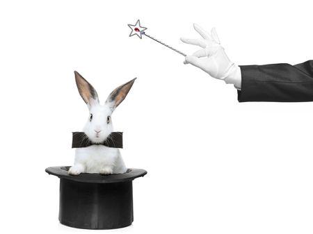sombrero de mago: Un conejo y una varita m�gica sobre fondo blanco