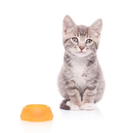 Una vista de un gato y un tazón de alimentos vacío junto a él aislados sobre fondo blanco  Foto de archivo