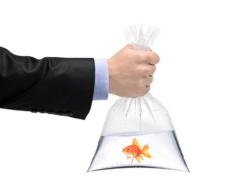 A hand holding a plastic bag with a golden fish isolated on white background Stock Photo - 8189574