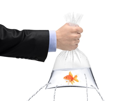 A hand holding a golden fish in a plastic bag with holes, being filled, but the water is leaking out the holes isolated on white background Imagens