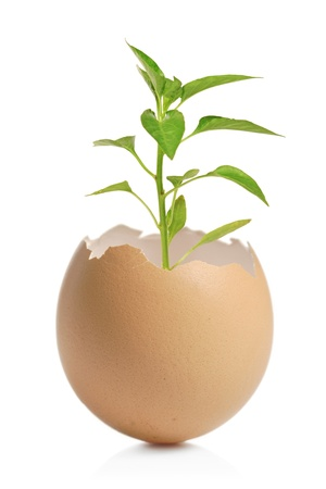 A green plant in cracked eggshell isolated on white background Stock Photo - 8427882