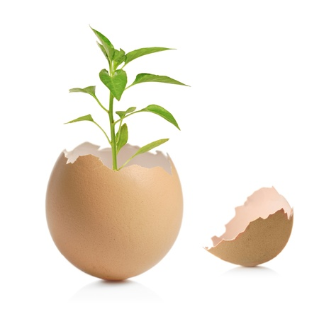 A view of a green plant in cracked eggshell isolated on white background photo