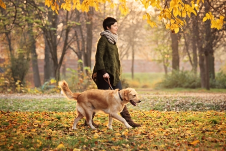dog park: A girl and her dog (Labrador retriever) walking in a park in autumn
