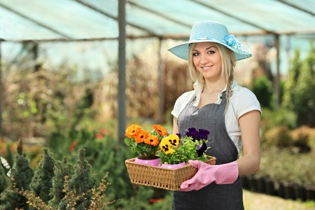 Female gardener holding a basket with flower pots in a garden photo