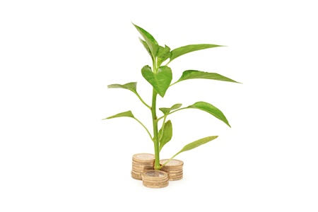 Sapling growing from pile of coins isolated on white background photo
