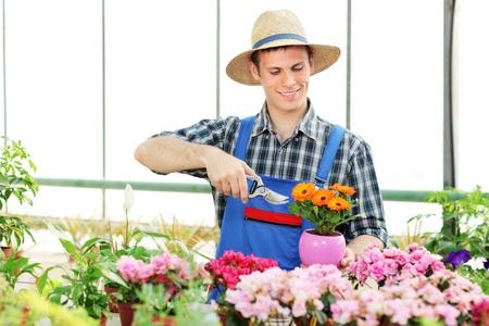 A male gardener pruning flowers in a garden photo