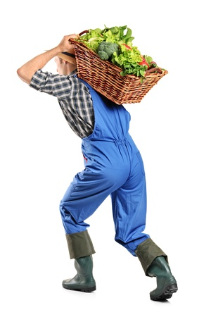 Full length portrait of a farmer carrying a basket of vegetables on his back isolated on white background photo