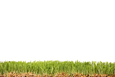 A studio shot of a green grass isolated on white background photo