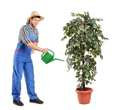 Full length portrait of a person watering a decoration plant isolated on white background photo