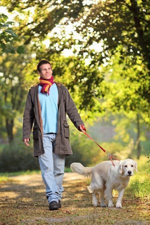 dog walking: A boy and his dog (Labrador retriever) walking in the park in autumn Stock Photo