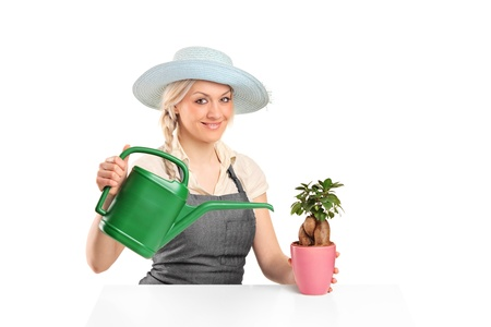 A female florist watering a bonsai tree isolated on white background photo