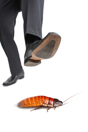 A giant foot about to step on a cockroach isolated on white background photo