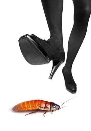 mujer fea: Un tac�n alto a punto de pisar una cucaracha sobre fondo blanco