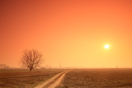Empty road, a tree and the sun at sunset Stock Photo - 11744283