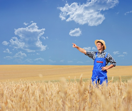 A young farmer pointing in a wheat field, Macedonia Stock Photo - 12633810