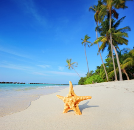 Tropical paradise in Maldives with starfish on a beach and turquoise sea photo