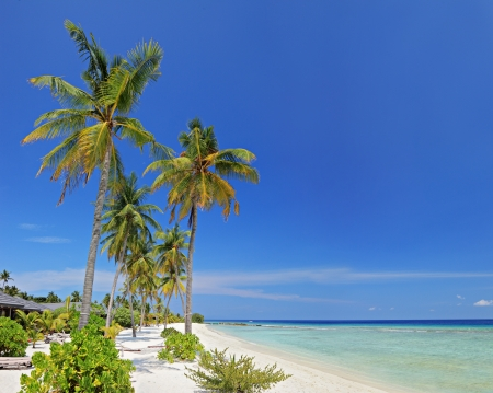A scene from Maldives island with sandy beach, palm trees and turquoise sea Stock Photo - 13612887