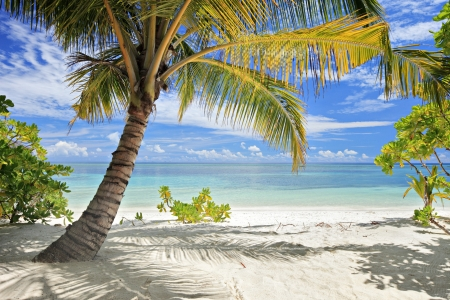 seasides: A scene of palm trees and sandy beach in Maldives island