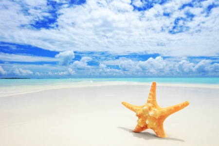 A view of a starfish on a beach, cloudy sky and turquoise sea at Kuredu island, Maldives, Lhaviyani atoll  photo